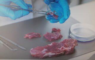 carne de caza investigación