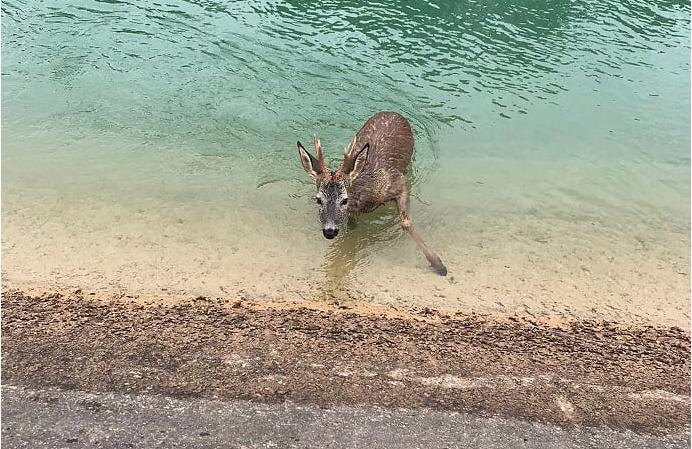 Animal atrapado en un canal