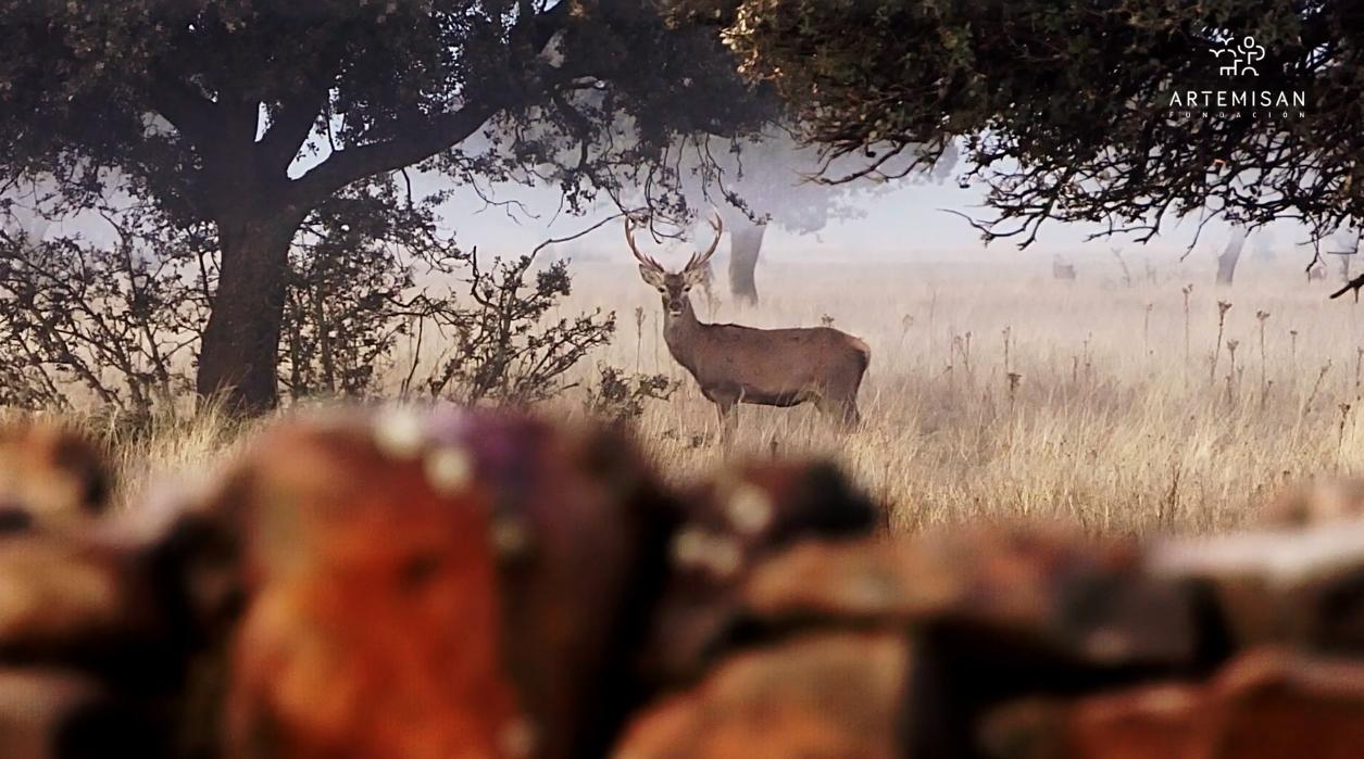 Parques Nacionales prohibición de la caza