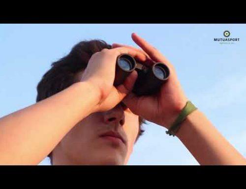 Proyecto Zorzales: monitorización, seguimiento y gestión de zorzales