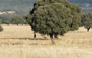 Ungulados en Parque Nacional