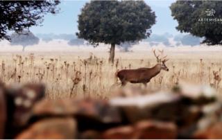 caza covid permisos