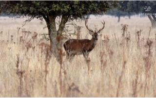caza, fauna