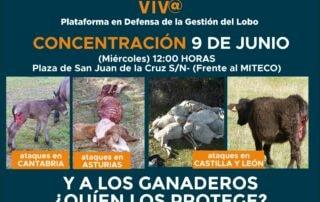 cartel concentración contra la protección del lobo