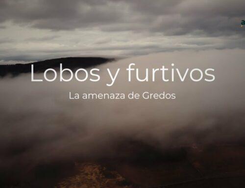 Lobos y furtivos, la amenaza de Gredos